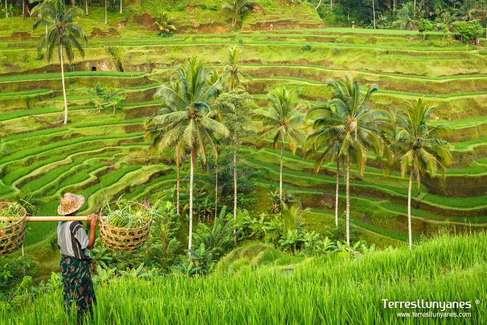 Viajes-indonesia-bali-03