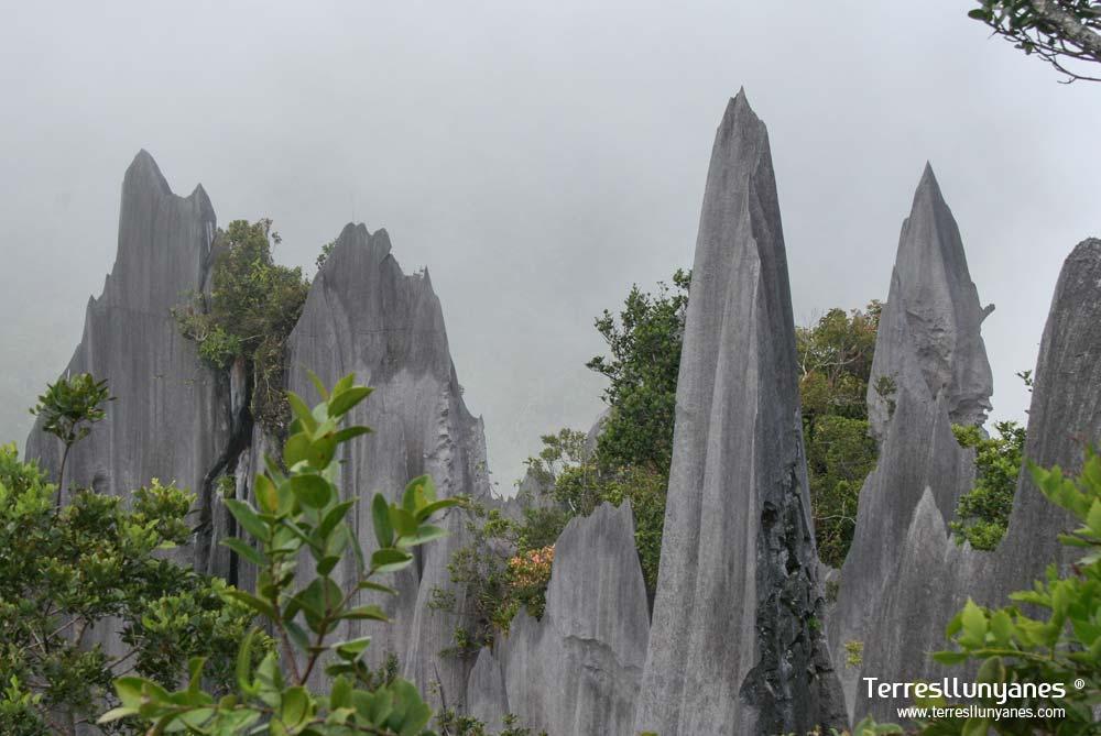 Viajes-indonesia-borneo-06