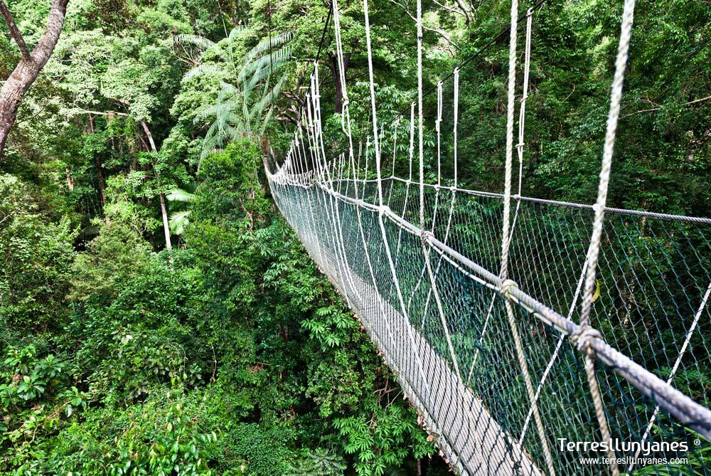 Viajes-indonesia-borneo-07