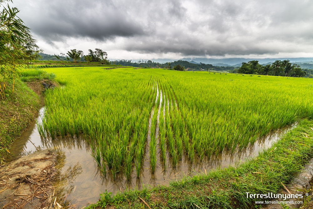 Viajes-indonesia-sulawesi-12